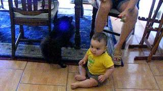 Like Boo Black Pomeranian Puppy Midnight & Baby Devyn
