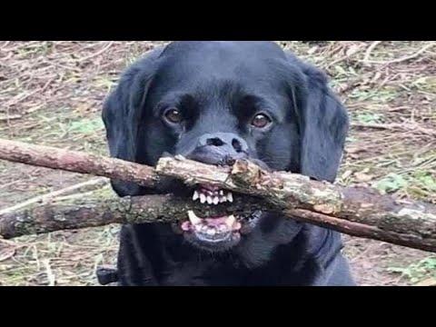 ПРИКОЛЫ С ЖИВОТНЫМИ 😺🐶 Смешные Животные Собаки Смешные Коты Приколы с котами Забавные Животные #93