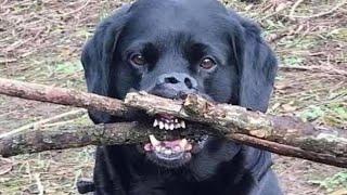 ПРИКОЛЫ С ЖИВОТНЫМИ ?? Смешные Животные Собаки Смешные Коты Приколы с котами Забавные Животные #93 онлайн томоша килиш