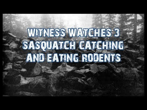 WITNESS WATCHES 3 SASQUATCH CATCHING AND EATING RODENTS! The Glen Thomas Story