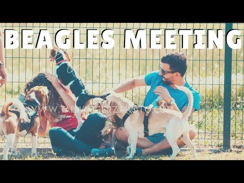 Beagles Meeting Portugal
