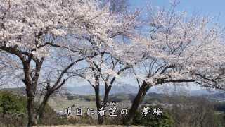 夏木綾子 - 桜橋