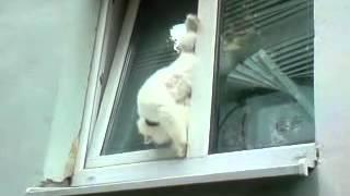 Коте застрял в окне, прям пищера!!!!))))).mp4