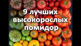 9 самых лучших высокорослых помидор! Вы удивитесь: томат гигант весом 2 кг.