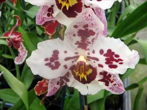 exotische orchideen von der blumen riviera eine. Black Bedroom Furniture Sets. Home Design Ideas