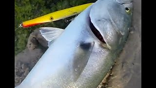 Outdoor Beach FUN Surf Fishing 4 Long Island Bluefish With Gregory