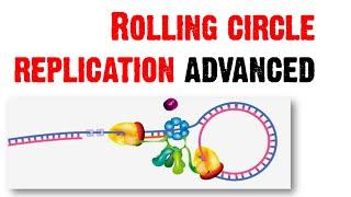Rolling circle replication advanced