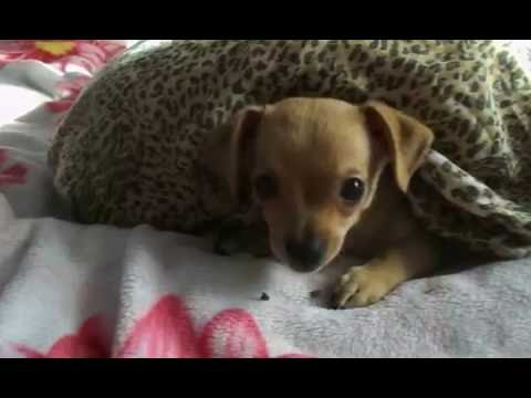Про щенка - Смешное видео -