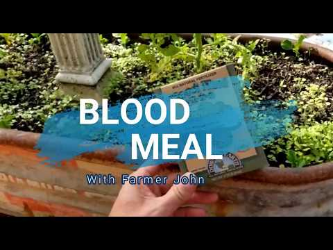 Blood Meal for those leafy greens!
