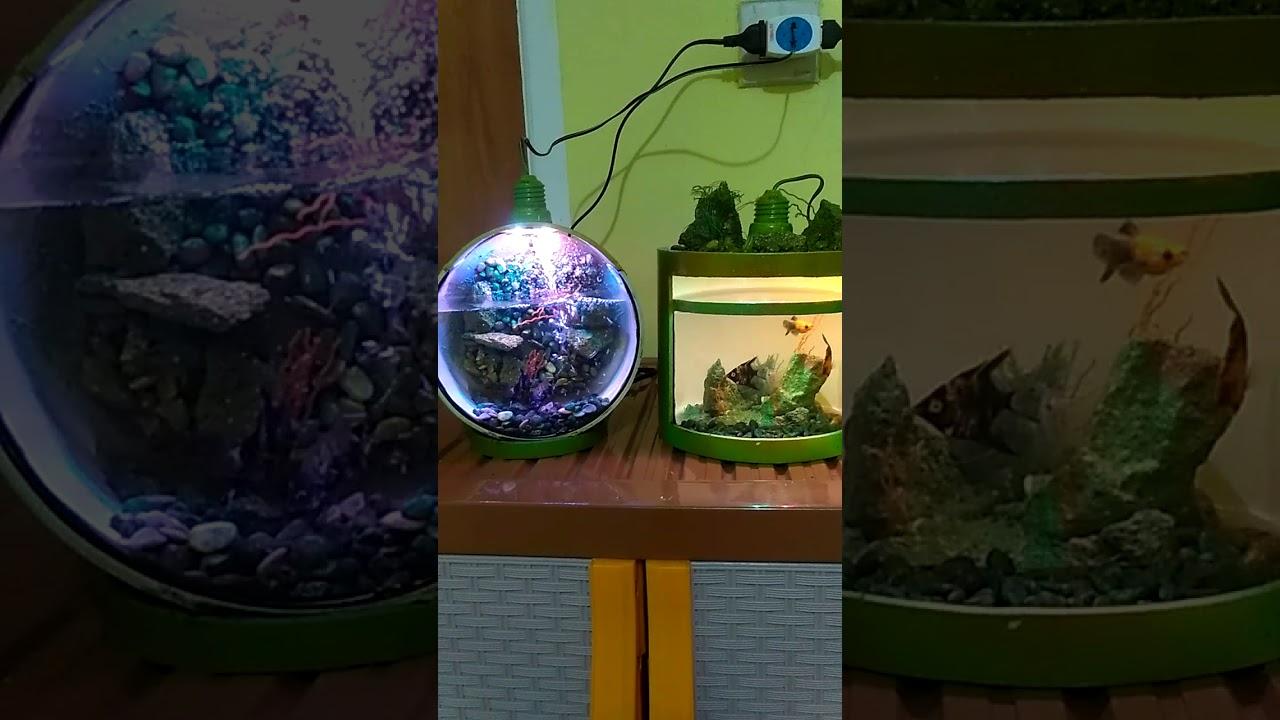 Aquarium unik - YouTube