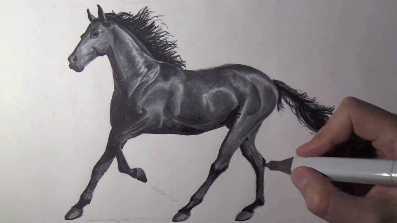 Comment Dessiner Un Cheval Realiste Etape Par Etape Part 2 Youtube
