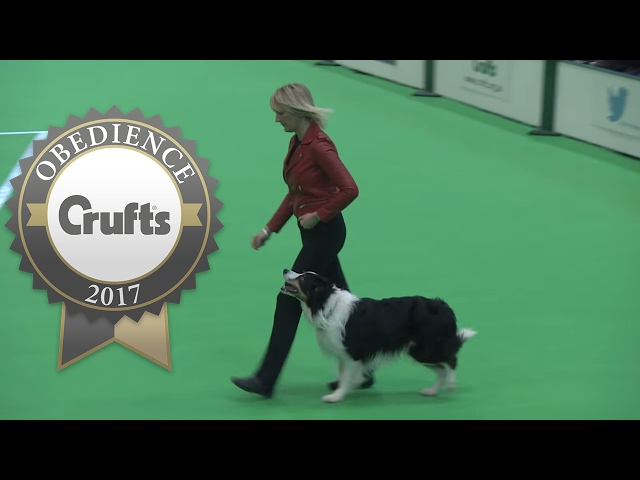Obedience Championship - Dogs - Part 1 | Crufts 2017