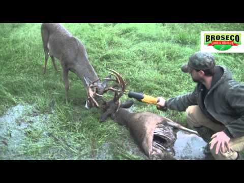 Broseco Ranch Locked Up Bucks