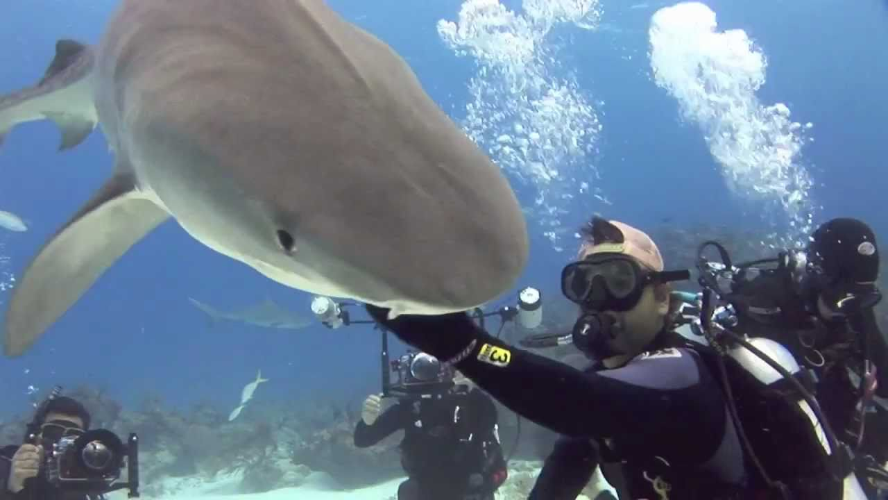 How to touch a shark
