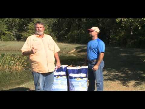 Raising Catfish In Small Ponds
