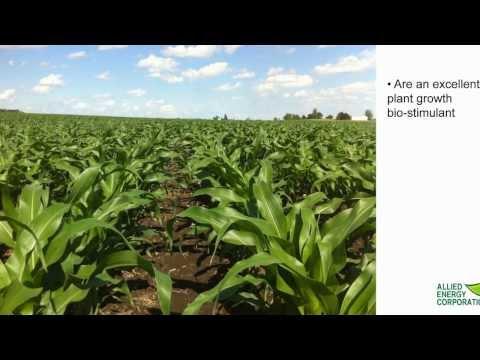 An Effective Soil Enhancer- Allied Energy Corp