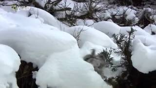 National Geographic documentary - Wild Japan - Nature Documentary