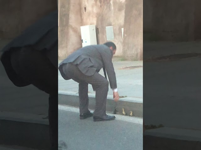 My airport shuttle driver in Rome saving the lives of three ducklings