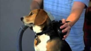 Pet Grooming Tools for Beam Vacuum System