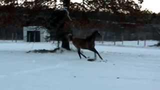 My horse Magnificent Liiason!(Leo)
