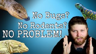 Top 5 Reptiles That DONT Need …