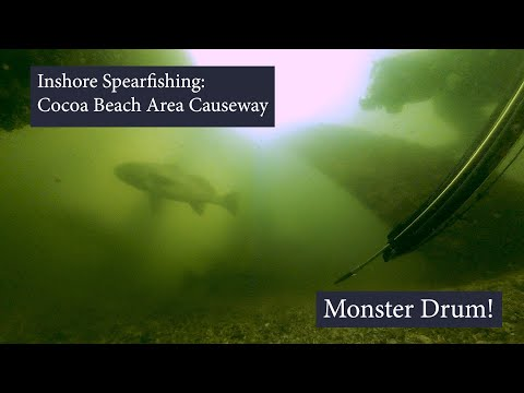 Inshore Spearfishing: Cocoa Beach Area Causeway