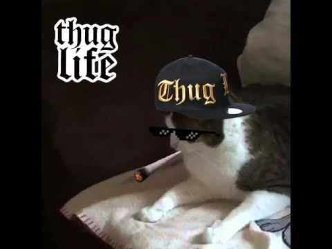 Thug Life Cat - YouTube