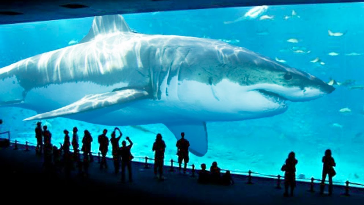 Gemiyi Bütün Yutabilir Tarih öncesi Yaşamiş 10 Köpek Balığı Youtube