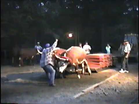 Conquerall Mills Ox and Horse Pull 1992 - Medium Oxen & Medium Horses
