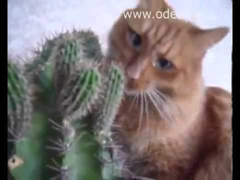 Приколы о котах и кошках видео ржач