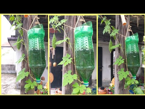 Upside Down Bitter Gourd In Plastic Bottle/ Plastic Bottle Gardening/Bitter Gourd Inverted