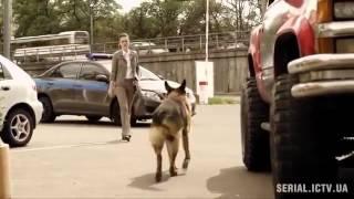 Пёс 2 сезон, 7 серия