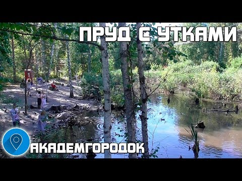 ПРУД С УТКАМИ. АКАДЕМГОРОДОК. Новосибирск