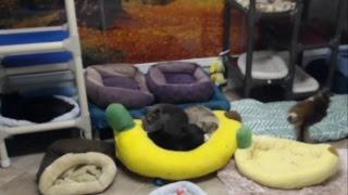 Blind Cat Rescue & Sanctuary, Inc Live Stream