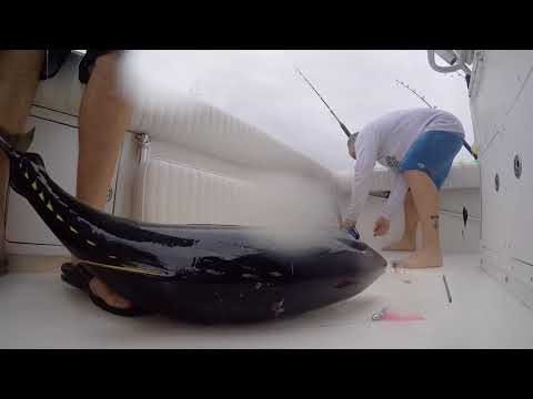 Yellowfin & Bluefin Tuna Ocean City MD First 2018 Offshore Trip | Atlantic Sportsmen