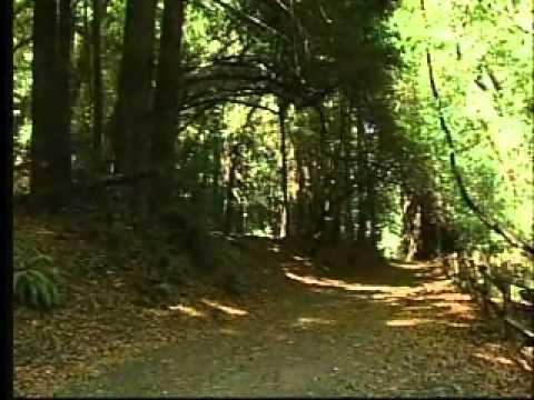 EBRPD - Redwood