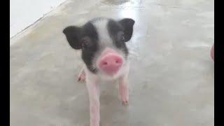 Animales que viven en el refugio (1)