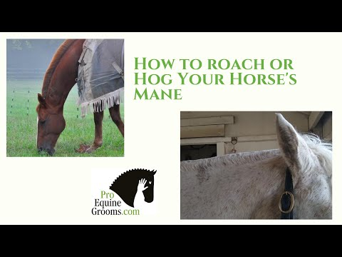 How to roach or hog your horse's mane!