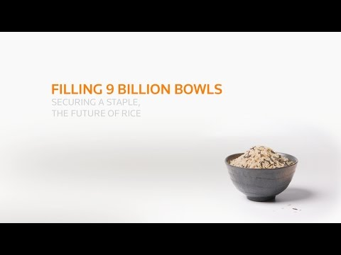How to feed the world with a grain of rice