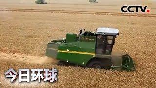 [今日环球]2019年中国粮食总产量再创新高| CCTV中文国际