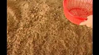 Đệm lót lên men - Thảm sinh thái với chế phẩm sinh hoc Balasa N01 phần 4