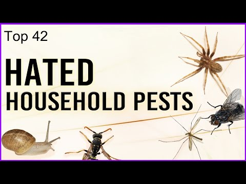 Top 42 Hated Household Pests