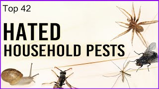 Video Top 42 Hated Household Pests download MP3, 3GP, MP4, WEBM, AVI, FLV Juli 2018
