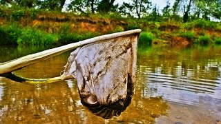 Survival Tierische Notnahrung Kescher zur Jagd
