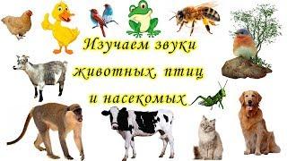Изучаем звуки животных, птиц и насекомых. Развивающий мультик для малышей