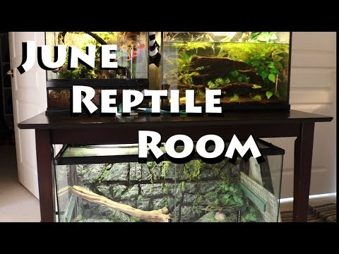 June 2017 Reptile Room!