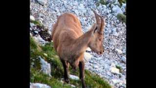 RAZOR 2601m Julian Alps - 11 hours hiking