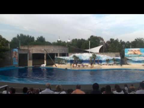 DELFINE Zoo Aquarium de Madrid part 2