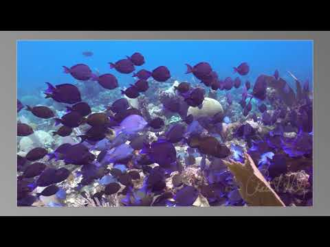 Roatan Scuba Vacation July 2018