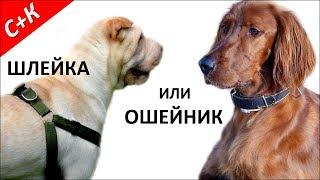 Шлейка или ошейник для собаки. Как сделать правильный выбор.